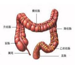 直肠解剖图